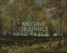 "VAN GOGH VINCENT - POPLARS NEAR NUENEN, 1885 - ART PRINT POSTER 11"" X 14""(1640)"