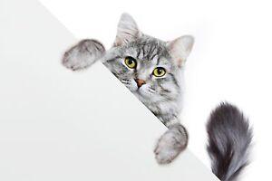 VLIES FOTOTAPETE Tapete Wandbilder XXL für Kinder Tierchen KATZE 3D 3518
