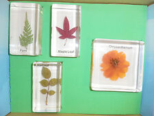 4 Flower & Leaf Box Set Cosmos & Fern & Rose Leaf & Maple Leaf Teaching Specimen