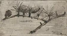 NEVILLE SHAW Etching PINE CONE STUDY STILL LIFE c1950 BOTANICAL