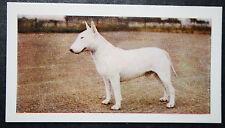 English Bull Terrier  Vintage Colour Photo Card  ##  VGC