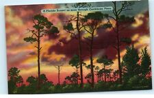 *Florida Sunset Caribbean Pines Pine Trees Silhouette Vintage Linen Postcard A64
