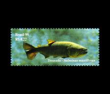 Fishes Pantanal Brazil - Dorado (Salminus maxillosus) Brasil 1999