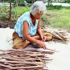 2000 Seeds Organic Moringa Olifera Horseradish Plant + PHYTOSANITARY CERTIFICATE
