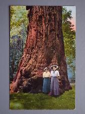 R&L Postcard: Giant Big Tree nr Santa Cruz California, Edward Mitchell USA