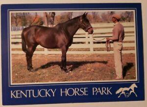 Vintage Postcard John Henry Thoroughbred racehorse John Henry Lexington Kentucky