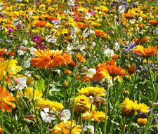 WILDFLOWER MIX 3B Bee Bird Butterfly - 1 Oz Bulk Seeds