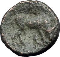 AMPHIPOLIS in MACEDONIA 148BC RARE R2 Ancient Greek Coin ATHENA BULL i63718