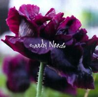 POPPY - Papaver Black Paeony 50 seeds
