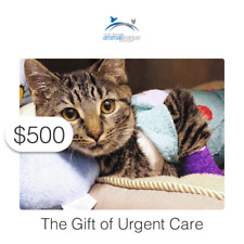 $500 Charitable Donation For: The Gift of Urgent Care