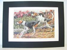 Rare 1919 Antique Color Dog Print from Original Paintings - Foxhound