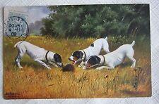 Dogs Chien -Vintage Signed Postcard-Terrier Dogs Barking at Hedgehog 1908
