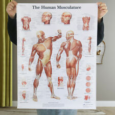 Large Poster Map of Human Muscle Distribution Hospital Education Research DIY