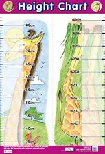 A2 Height Chart Poster/ educational / learning / science / health