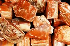 "Petrified Wood Tumbled 2"" Polished Rocks and Minerals Specimen Raw Root Chakra"