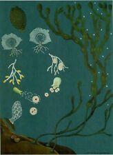 Zoology School Poster Art Print Map Image Jung-Koch-Quentell Algues Fucus