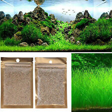 Graine d'aquarium Graines de plantes Water vert herbe Aquarium Decor