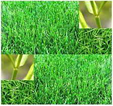 (1 oz.)  Bermuda Grass Seed - Lawn Grass Seeds - HARDY ZONES 7 - 10