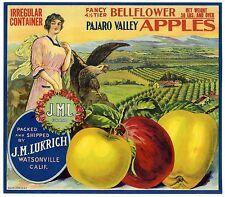 J.M.L./JML~RARE ORIGINAL 1910s WATSONVILLE CALIFORNIA APPLE FRUIT CRATE LABEL