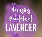 Lavender Capsules Flower Powder Dr Sebi 100 Organic TCM Xun Yi Cao