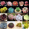 60 pcs Succulents Seeds Plant Flower Seeds Rare Potted Home Garden