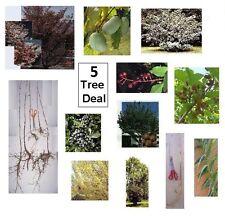 4 Flowering Trees - Fast Growing Dogwood, Buckeye, Redbud - Plan for Fall