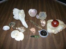 Lot of Seashells Nautical Crafts Decor sand dollar ***LOOK****