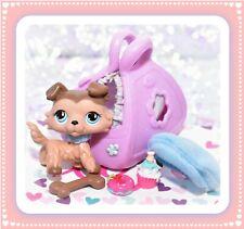 ❤️Authentic Littlest Pet Shop LPS #893 Mocha COLLIE Dog Blue COLLAR Teardrop❤️