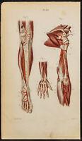 1846 - Planche anatomie Angiologie : Artères de la jambe, bras, pied, main