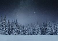 A1 Winter Woods At Night Poster Art Print 60 X 90cm 180gsm - Forest Gift #16812