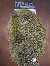 Fly Tying Whiting American Rooster Saddle Grizzly dyed Olive #A