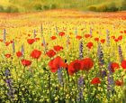 Wall art Canvas HD print Poppy Landscape Oil Painting printed on canvas L052