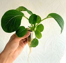 Floating Garden Kit for Indoor Gardening Hydroponic Technology DIY Recycle