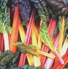 Vegetable Swiss Chard Rainbow  450 seeds Beat Leaf