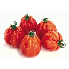 graines de tomate chair de bœuf aumônière vendu en sachet de 30 graines