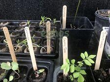 10 Wooden Timber Food Safe Plant Labels Tags 140x16mm Organic Garden Safe *AU*