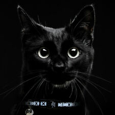 Cat safety breakaway collar - Lazer Brite - cute black stars - reflective