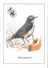 FDC 2653 - Oiseau Buzin sur gravure format A4 !