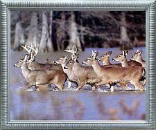 Herd of Whitetail Deer Crossing Lake Animal Wildlife Wall Decor Framed Picture