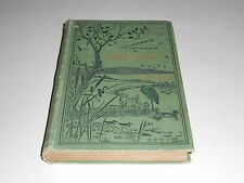1900 Bird-Life A Guide To The Study Of Our Common Birds by Frank M. Chapman