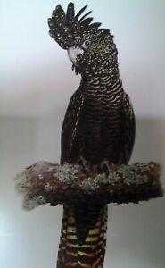 "Gordon Hanley, L Edition Print/s - Bird Study Series ""Red Tailed Black Cockatoo"