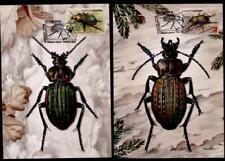 Käfer. Laufkäfer. 4 Maximumkarten. Weißrußland 2016