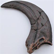 RAPTOR Dinosaur Killer Claw •  NEW fossil replica