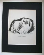 Pekingese Champion Dog Print Gladys Emerson Cook Bookplate 1945 11x14 Matted