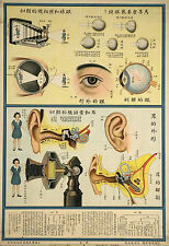 Framed Vintage Chinese Medical Print – Eyes & Ears System (Picture Anatomy Art)