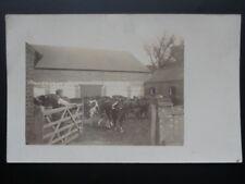 Unknown Old FARM YARD showwing FARMER AND COWS - Old RP Postcard / prob c1910