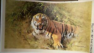 Tiger Fire By David Shepherd