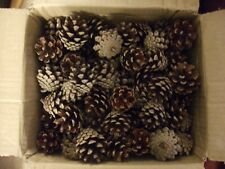 SMALL NATURAL PINE CONES X100 - 3-4 cms