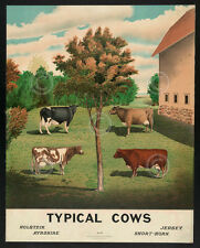 Typical Cows Vintage Reproductions Farm Cattle Country Print Poster 15.5x12