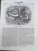 1842 L''ALBUM DI ROMA': ORNITOLOGIA; LEGIONE STRANIERA E ARABI DI ABD EL - KADER